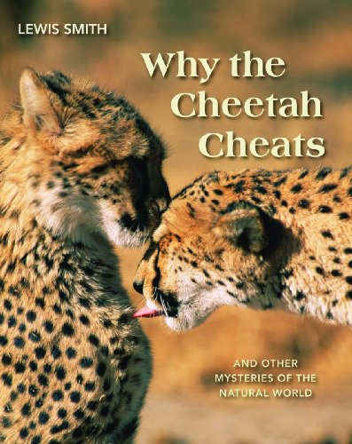 9781554075348: Why the Cheetah Cheats: And Other Mysteries of the Animal World