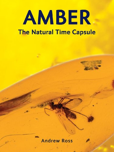 9781554076093: Amber: The Natural Time Capsule
