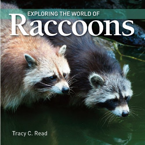 9781554076260: Exploring the World of Raccoons