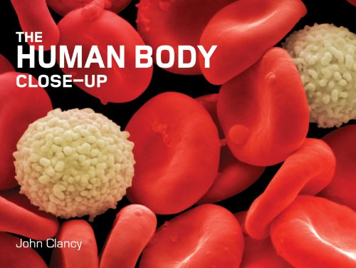 9781554079186: The Human Body Close-Up (Close-Up (Firefly))