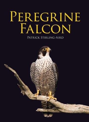 9781554079278: Peregrine Falcon