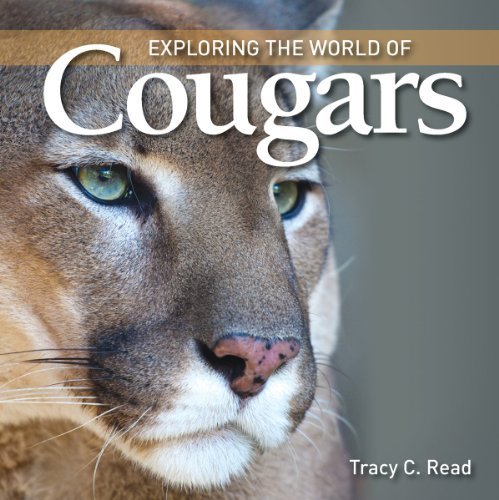 9781554079568: Exploring the World of Cougars