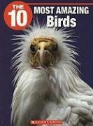 The 10 Most Amazing Birds (10 (Franklin: Jenkins, Meghan Jennifer