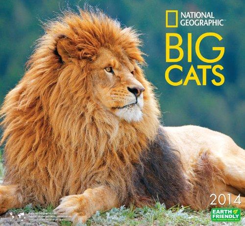 9781554566334: National Geographic Big Cats 2014 Calendar
