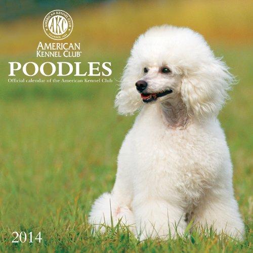 9781554567355: Poodles
