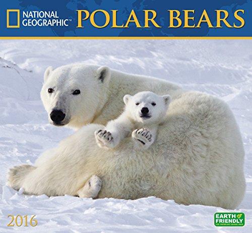 9781554568833: Cal 2016 Polar Bears