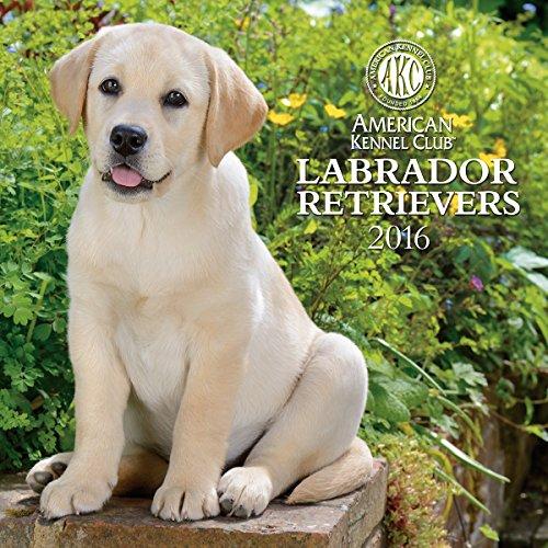 9781554569014: Labrador Retrievers American Kennel Club 2016 Wall Calendar