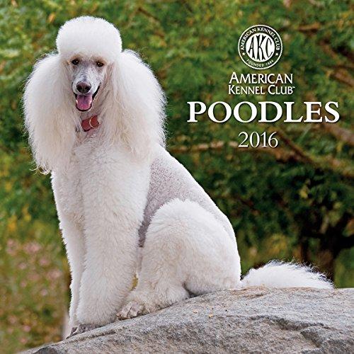 9781554569021: Cal 2016 Poodles