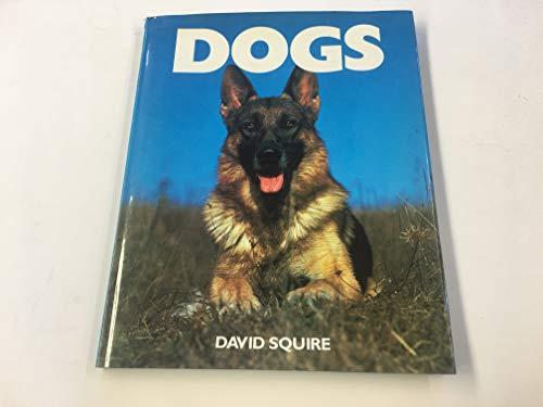 Dogs: Squire, David