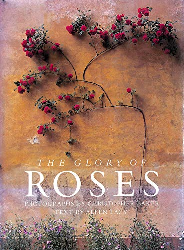 The Glory of Roses: Lacy, Allen