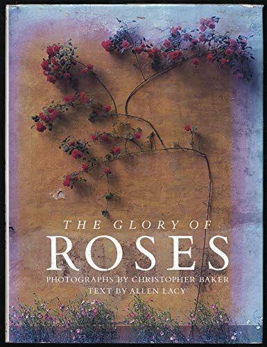 The Glory of Roses: Lacy, Allen, Photos by Christopher Baker