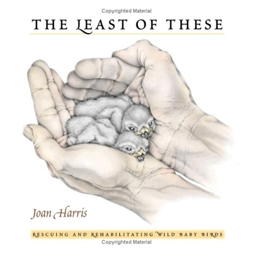 9781558688605: The Least of These: Wild Baby Bird Rescue Stories