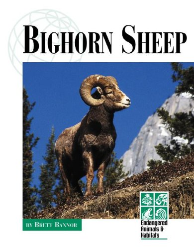 Endangered Animals and Habitats - Bighorn Sheep: Bannor, Brett