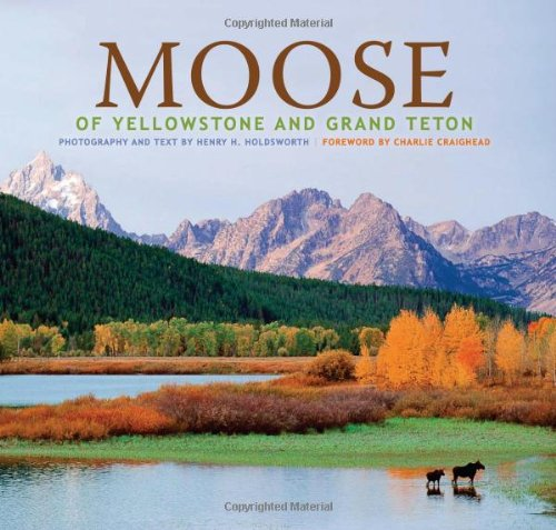 Moose of Yellowstone and Grand Teton (Hardcover): Henry H. Holdsworth