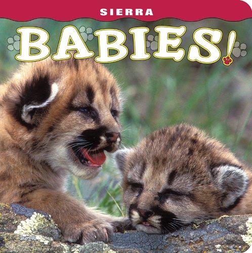 9781560375579: Sierra Babies!