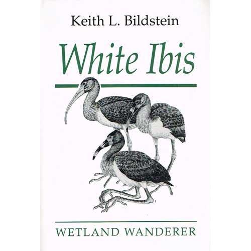 White Ibis : Wetland Wanderer: Keith L. Bildstein