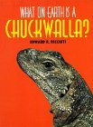9781567110890: What on Earth Is a Chuckwalla?