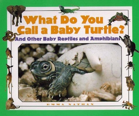 9781567113662: What Do You Call a Baby - Turtle? And Other Baby Reptiles and Amphibians