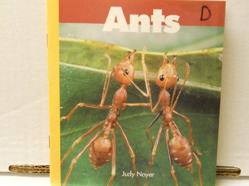 Ants: Judy Nayer
