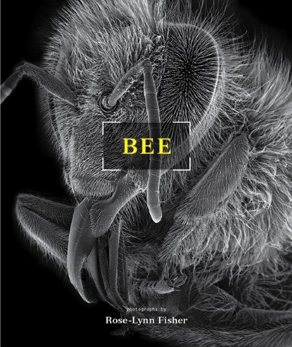 9781568989440: Bee