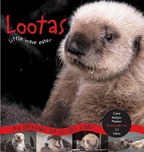 9781570611643: Lootas Little Wave Eater: An Orphaned Sea Otter's Story