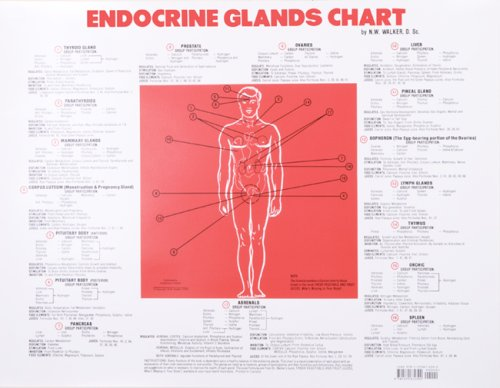 9781570672392: Endocrine Glands Chart