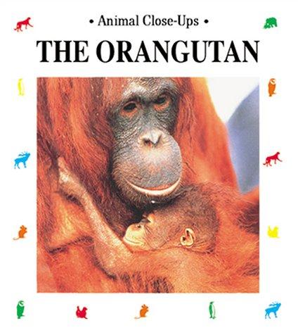 The Orangutan: Forest Acrobat (Animal Close-Ups): Sourd, Christine