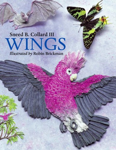 Wings: Collard III, Sneed B.