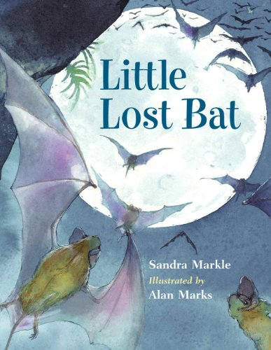 9781570916571: Little Lost Bat