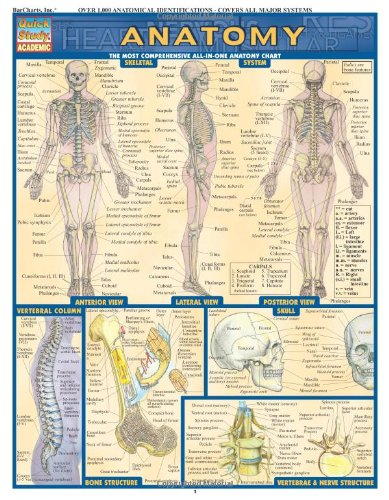 9781572224919: Anatomy (Quickstudy: Academic)