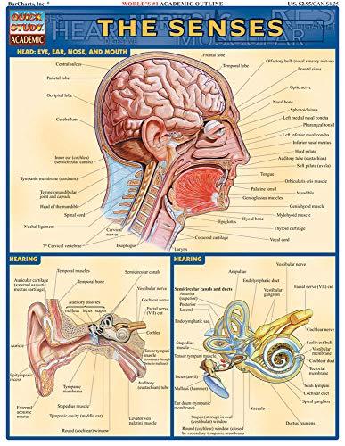 The Senses Reference Guide: Head: Eye, Ear,: Lisa Drucker Kaaren