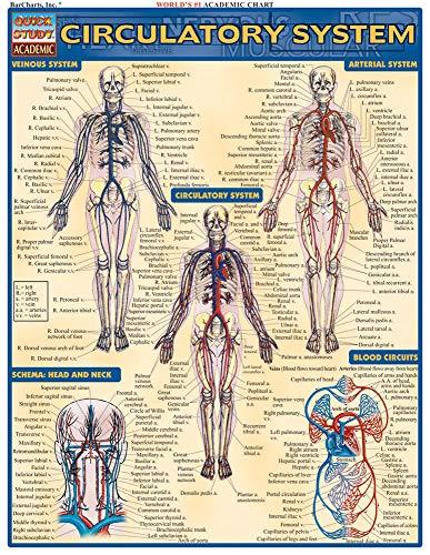 Circulatory System Laminate Reference Chart (Medical Series): Lisa Drucker Kaaren