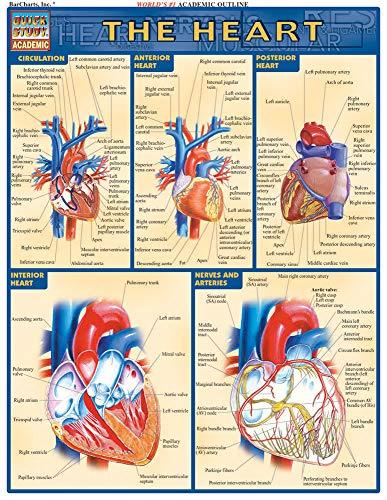 9781572225374: The Heart (Quick Study Academic)