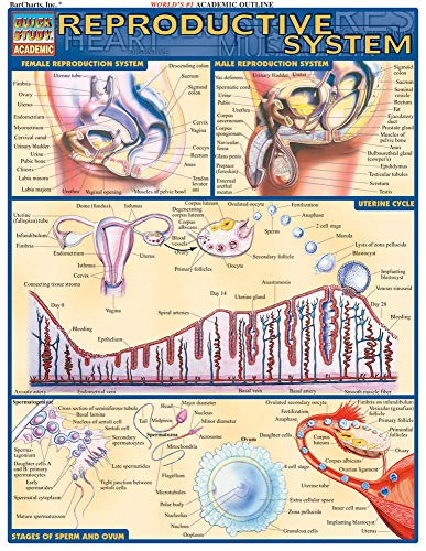 Reproductive System Laminated Reference Guide: Lisa Drucker Kaaren