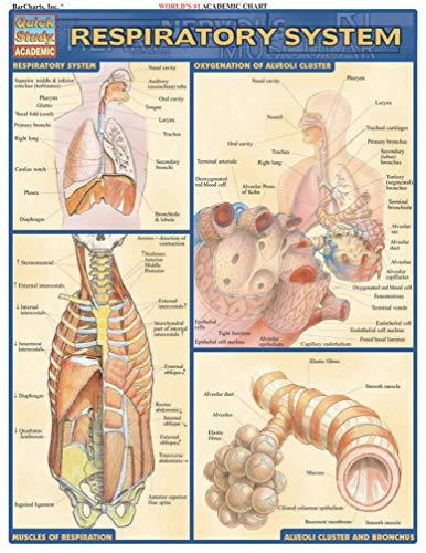 Respiratory System Laminate Reference Chart (Medical Series): Lisa Drucker Kaaren