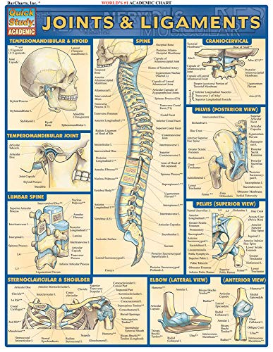 9781572226845: Joints & Ligaments (Quick Study Academic)