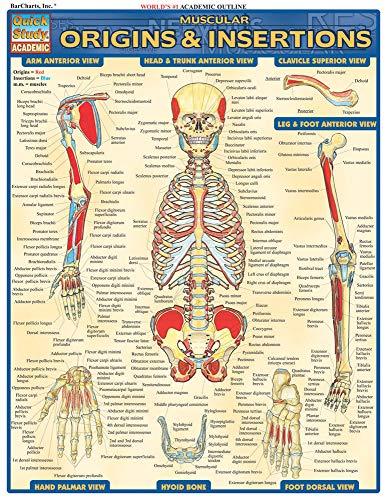 Muscular Origins & Insertions Laminate Reference Chart: Lisa Drucker Kaaren