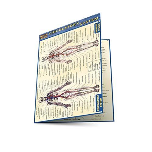 Pocket Circulatory System Laminated Reference Guide: Lisa Drucker Kaaren