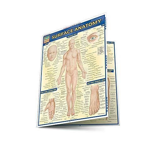 Surface Anatomy Laminated Reference Guide: Lisa Drucker Kaaren