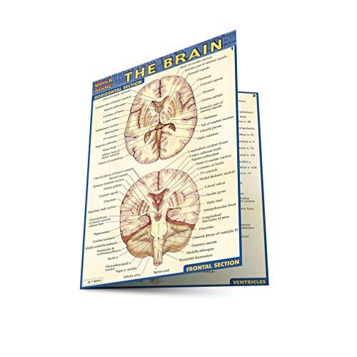 Pocket Brain Laminated Reference Guide: Lisa Drucker Kaaren