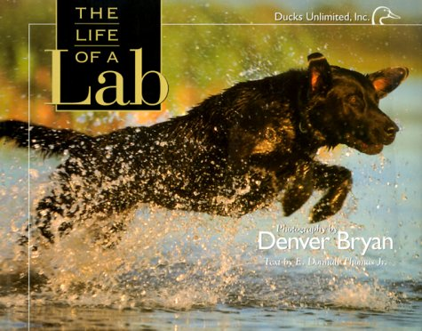 9781572232655: The Life of a Lab