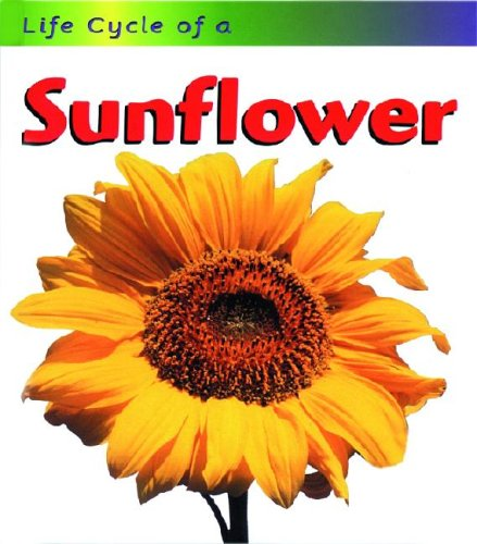9781575724751: Sunflower (Life Cycle of A...)