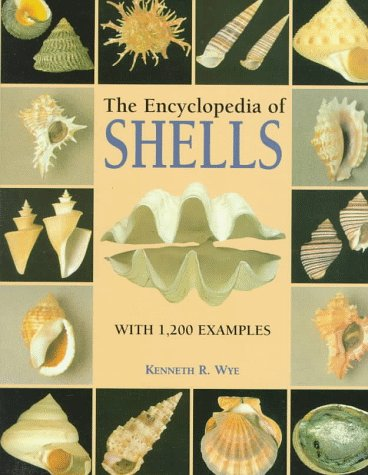 9781577150299: The Encyclopedia of Shells