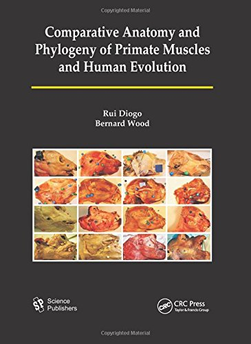 Comparative Anatomy and Phylogeny of Primate Muscles and Human Evolution: Diogo, Rui/ Wood, Bernard