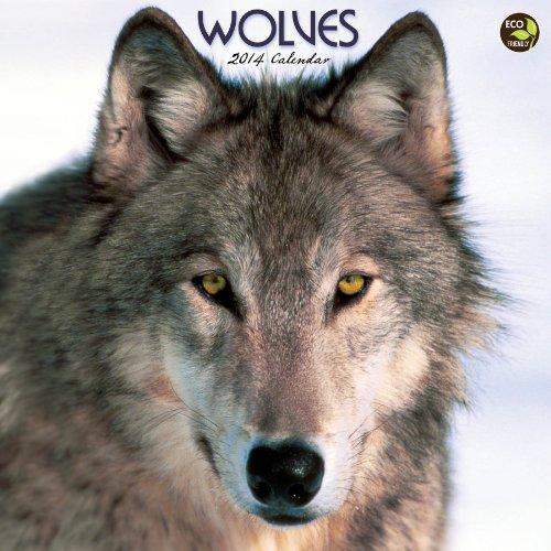 9781579000646: 2014 Wolves Wall Calendar