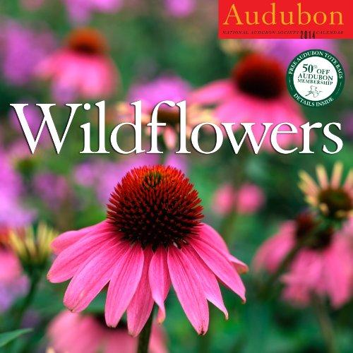 9781579655204: Audubon Wildflowers Calendar 2014