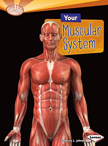 9781580139618: Your Muscular System (Searchlight Books: How Does Your Body Work? (Paperback))