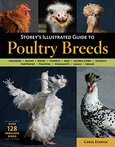 9781580176675: Storey's Illustrated Guide to Poultry Breeds