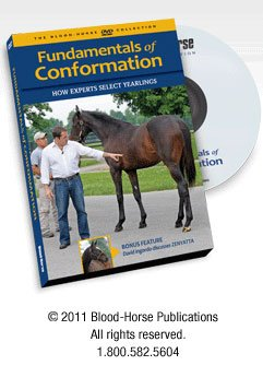 9781581503456: FUNDAMENTALS OF CONFORMATION: HOW EXPERTS SELECT YEARLINGS