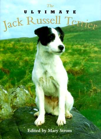 Ultimate Jack Russell Terrier